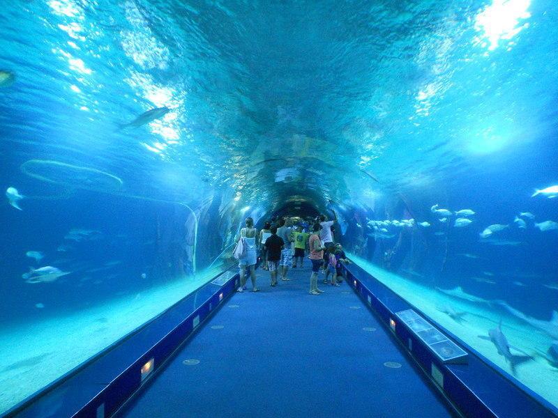 Aquarium de barcelona skip the line barcelona for Aquarium de barcelona